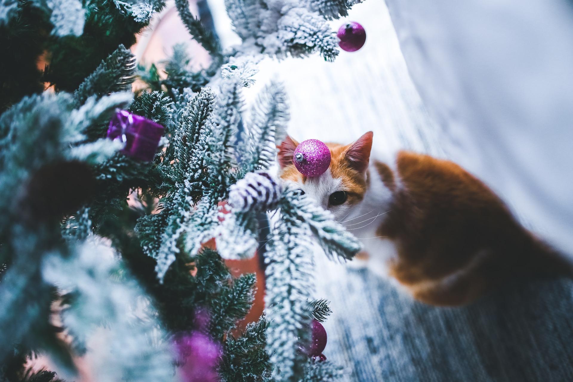 10 reasons why I love Christmas